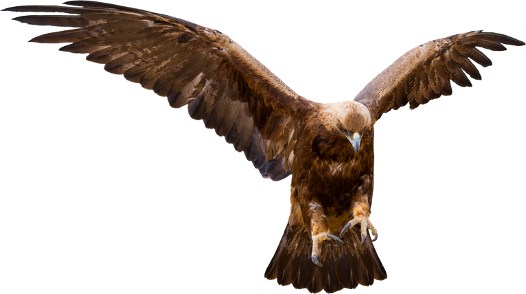 eagle-talons-capture.png